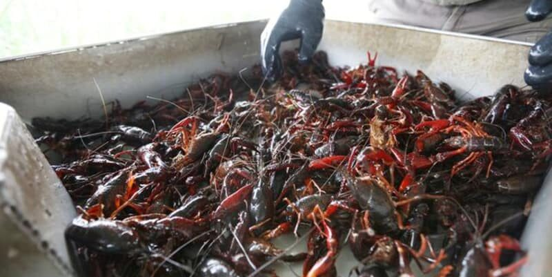 Thank You, El Niño!, Crawfish Haven Bed & Breakfast